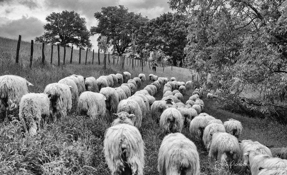 La ferme Kurutzaldia